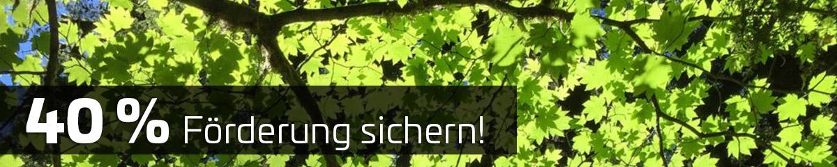 schwanitz-investitionsprogramm-wald